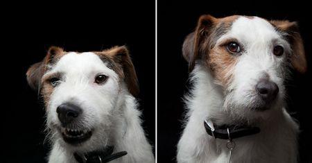 """宠物狗""""搞怪""""表情:狗萝莉滑稽可爱(12)"""