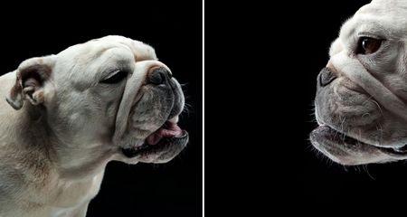 """宠物狗""""搞怪""""表情:狗萝莉滑稽可爱(2)"""