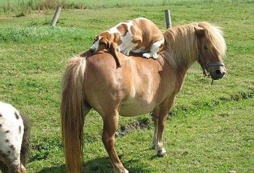 国外网站评选最搞笑动物照 嗨翻天了
