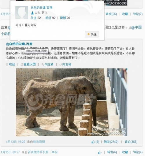 野生动物园大象瘦骨