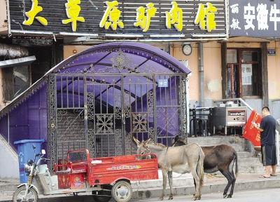 龙江白山乡养驴