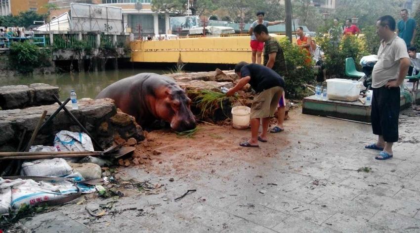 位于汕头市区中山公园内的动物园发生水浸,由于积水漫过了围蔽动物的