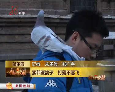 哈市男孩杀索菲亚广场鸽子为吃肉