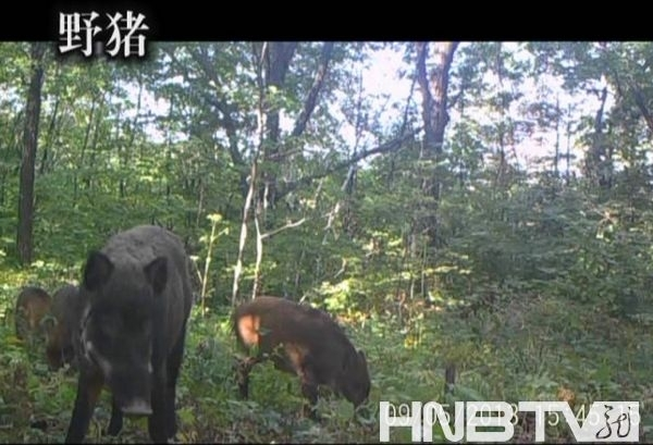 自然保护区野生动物()