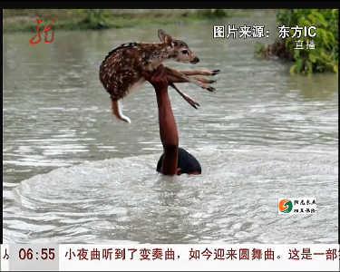 孟加拉男孩救溺水小鹿 单手托举助其上岸
