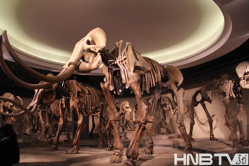 馆藏大量珍稀动物化石标本