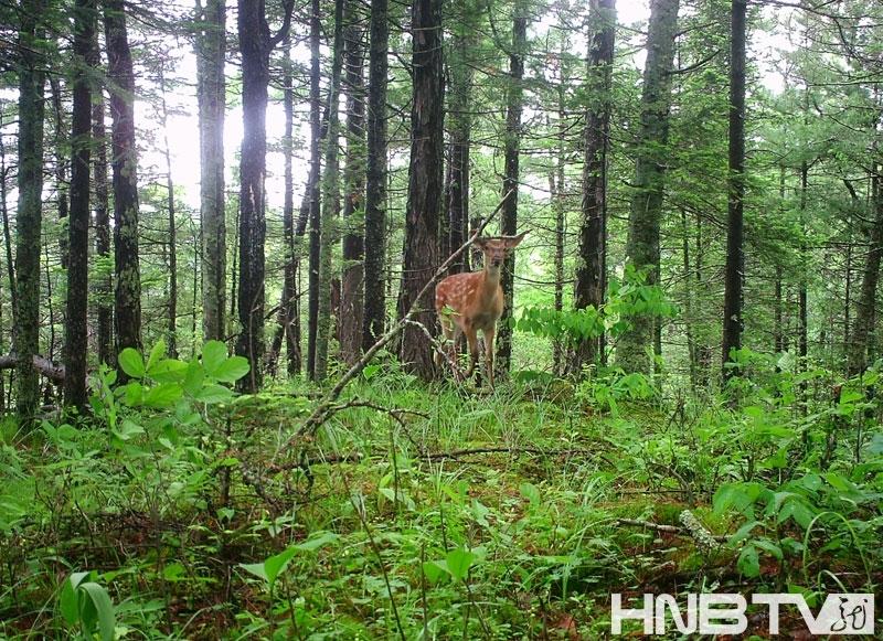 野生动物的生态环境