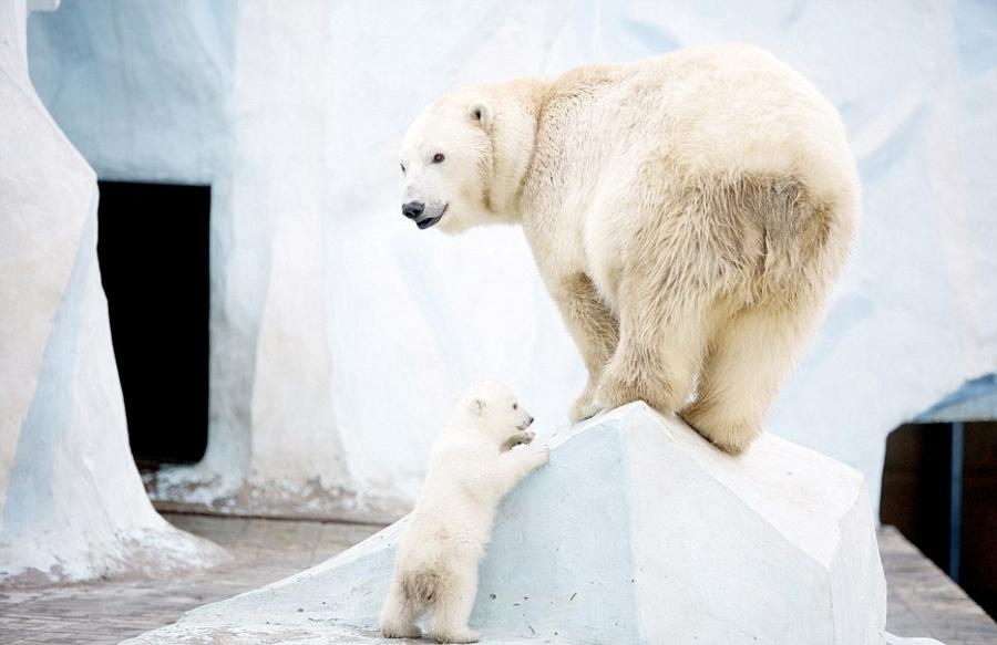 小北极熊上是第几集被蚊子咬了怎图片