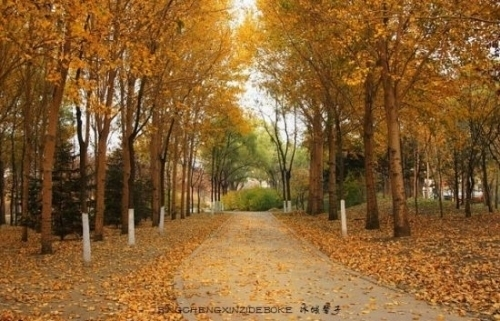 阿城金龙山(横头山)森林公园