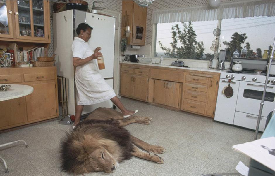 美国女明星养狮子当宠物 同居5年 黑龙江网
