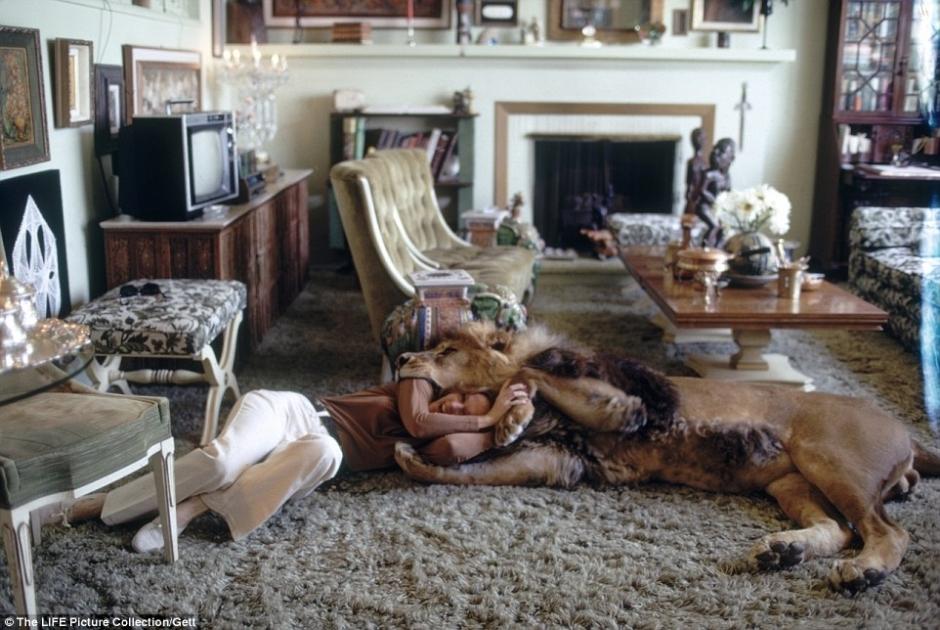 美国女明星养狮子当宠物 性感戏水照曝光组图