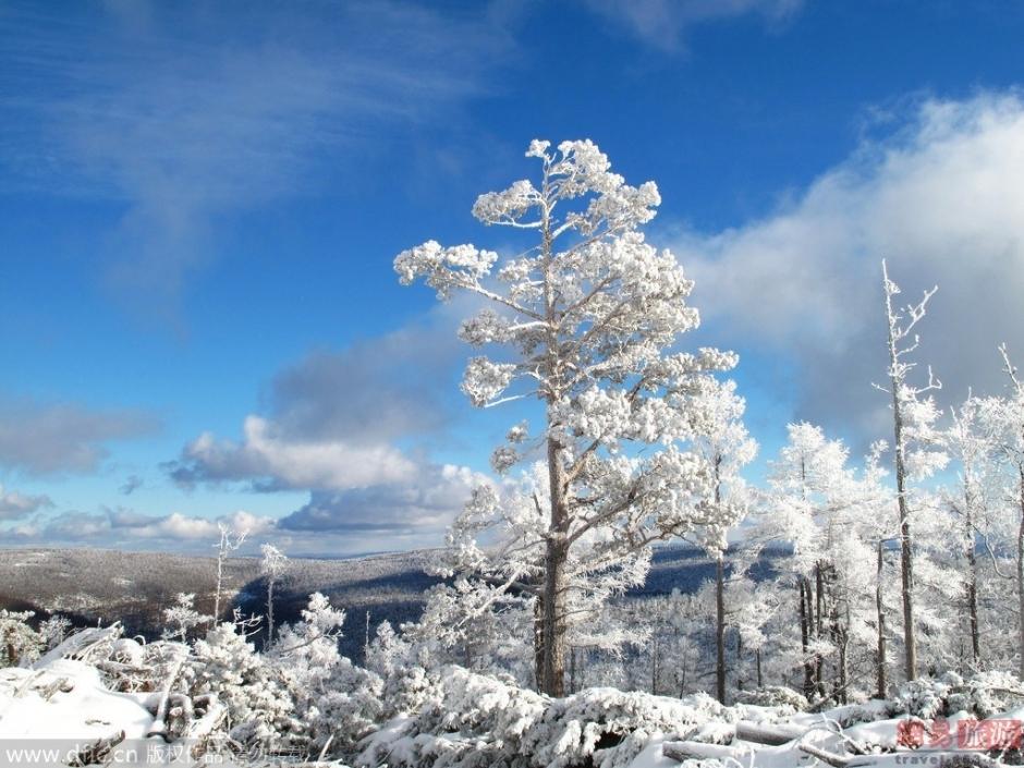 """大兴安岭四季美景之""""冬""""大兴安岭原始森林的冬季风光,茫茫林海雪原图片"""