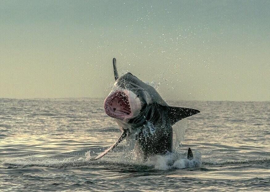 小海豹表情包动态图分享展示图片