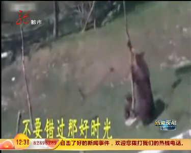 狗熊宝宝爬上树不肯下来熊妈妈着急使劲摇树