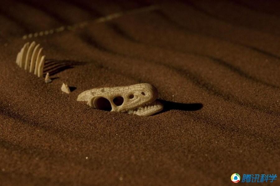十大史前动物谜团:恐龙不是冷血动物(组图)