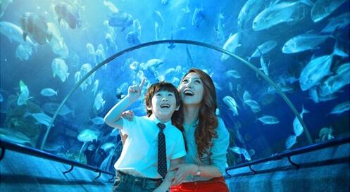 来大连圣亚海洋世界,就可以和可爱的动物明星们一起互动啦,孩子们也能