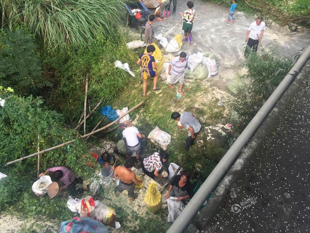 高速路运米车发生事故 村民生猛开铲车抢米