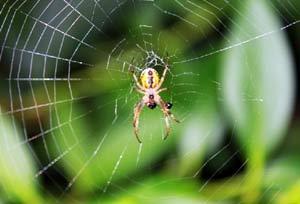 女子耳内夹出蜘蛛 昆虫入耳怎么办?