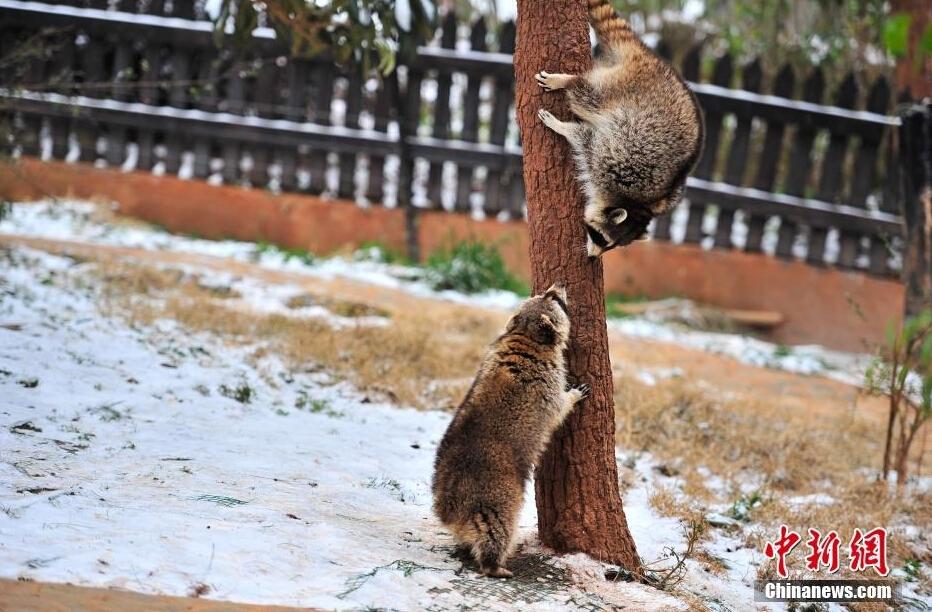 浣熊是几级保护动物