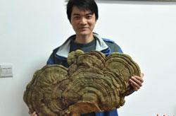 湖南发现罕见巨型野生大灵芝 年龄或逾百年