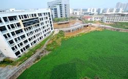 """广西一大学湖面水葫芦疯长 绿如水上""""大草坪"""""""