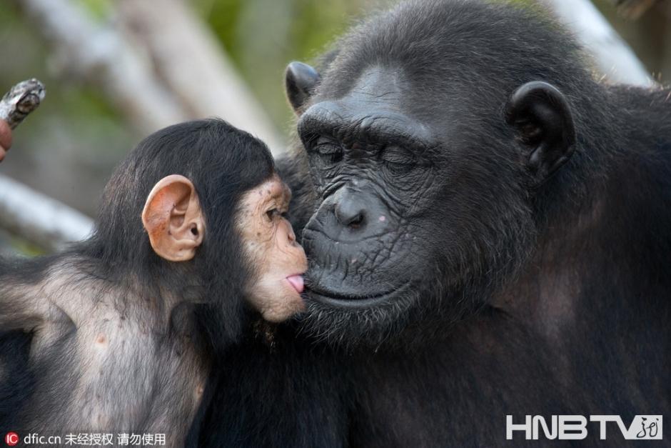 动物世界里的母亲节:晒晒温馨亲子照暖人心(组图)
