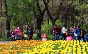 黑龙江省森林植物园50多万株郁金香盛开迎客