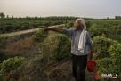"""""""我家就在地旁边"""",刘宗兰指着家的方向说。老两口对自家的土地很有感情,工钱给多给少都要参加劳动。"""