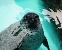 哈尔滨极地馆新进6只海豹集体首次亮相