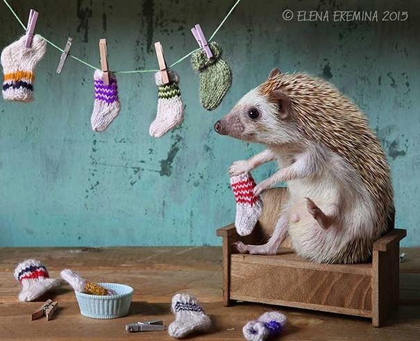 eremina擅长拍摄可爱的小动物,最近她把镜头对准了她的萌宠——小刺猬