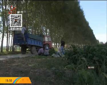 兰西调整种植结构发展订单农业