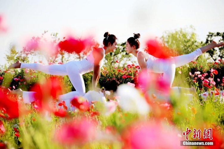戈壁花海上演美女瑜伽秀