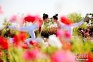 甘肃戈壁小城张掖上演美女瑜伽秀。多名女性瑜伽爱好者在当地黑河之滨——弱水花海练习各种高难度瑜伽动作,她们优美的身段与周边美景相得益彰,以此倡导人与自然的和谐相处、传播绿色生活理念。赵琳 摄