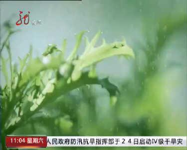 行风热线20160827
