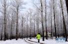 一名市民在黑龙江省呼玛县江畔公园树林中行走。