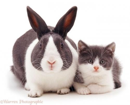 """趣味动物摄影:""""你瞅啥,我不是你妈妈"""""""