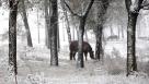 10月27日,牲畜在河北省张家口市沽源县的雪地里觅食。当日,河北坝上地区迎来降雪。 新华社发(武殿森 摄)