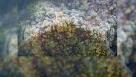 秦岭腹地陕西宁陕县平河梁自然保护区景色(10月28日摄)。秋日秦岭,初雪降临,五彩斑斓的山脊披上银装。 新华社记者 邵瑞 摄