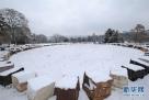 这是1月10日在瑞士日内瓦的联合国万国宫拍摄的雪景。