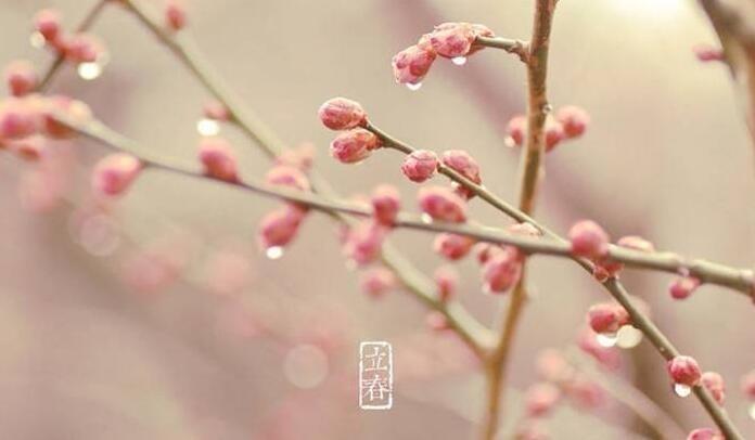 """立春      立春不仅是二十四节气中的第一个节气,而且是一个重要的节日。据了解,为了庆祝立春的到来,自古以来,除了要举行一些""""迎春""""祭典外,在立春日这天,我国民间还要喝春酒、吃春饼、打春牛、咬萝卜等习俗,很多人以为立春传统要吃饺子和面条,其实不是这样的,立春时有自己的食品,主要是春饼、萝卜、五辛盘等。"""
