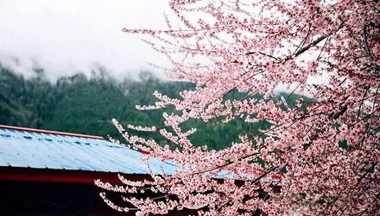 完爆日本樱花 国内这些秘境藏着最美的花海!