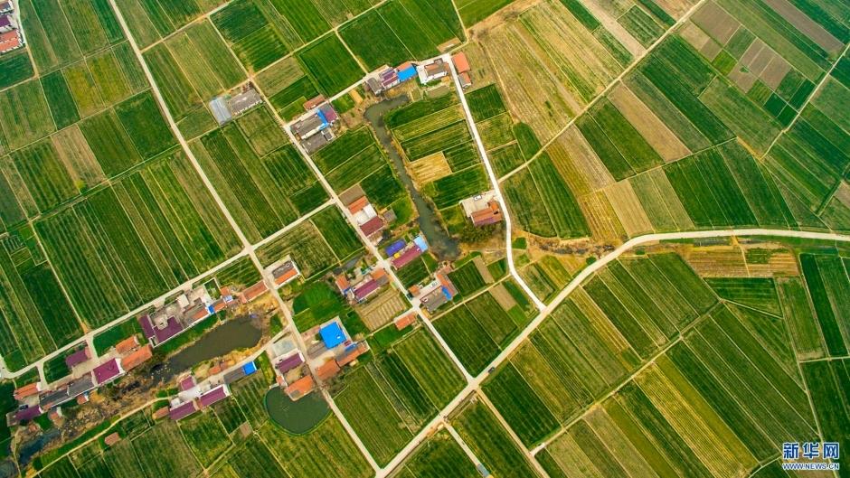 这是3月12日在江苏省南通市海安县航拍的乡村春景.