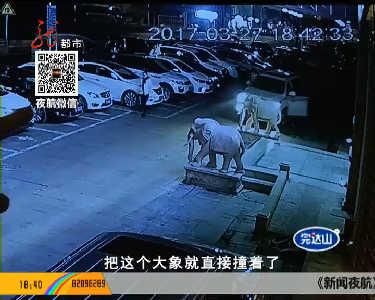 """男子开车撞""""大象""""脚被砸"""