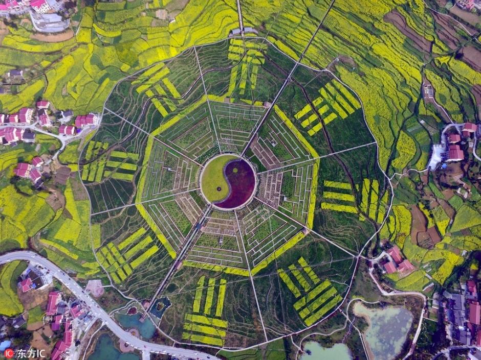 位于枇杷村中心地带的八卦园区,是种植的高粱,油菜,桃树,李树以及彩叶