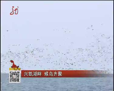 兴凯湖畔候鸟齐聚