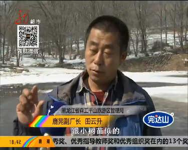 """哈尔滨平山神鹿滑雪场内树林出现寄生品种""""冻青"""""""