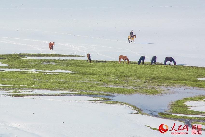 """""""我想我愿做草原上的一棵树,看着可爱的羊儿、英俊的马儿和帅气的牧人。"""""""