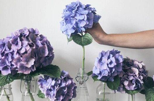 """今年春天不看花 因为你可以把花""""搬回家"""""""
