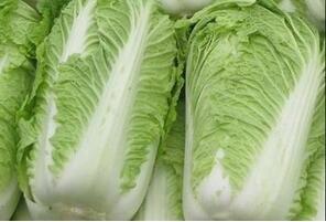 吃大白菜易伤阳气 改善体寒吃什么好?