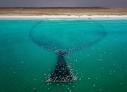 成千上万的印度洋沙丁鱼在二月份由印度洋洄游至阿曼海岸。空中拍摄的镜头展现了佐法尔省渔民们捕鱼的全过程:放网捕鱼,分装小网,卖到当地,出口国外。图中展现了水中弧形黑网捕鱼的场景。